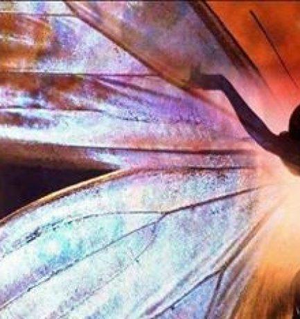 Şi fluturii te învaţă cum să iubeşti…